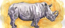 """Yellow Rhino"" by Adam Wallenta"
