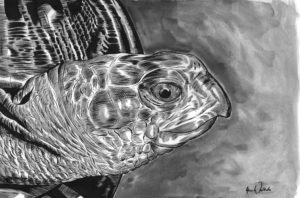 """Turtle"" by Adam Wallenta"
